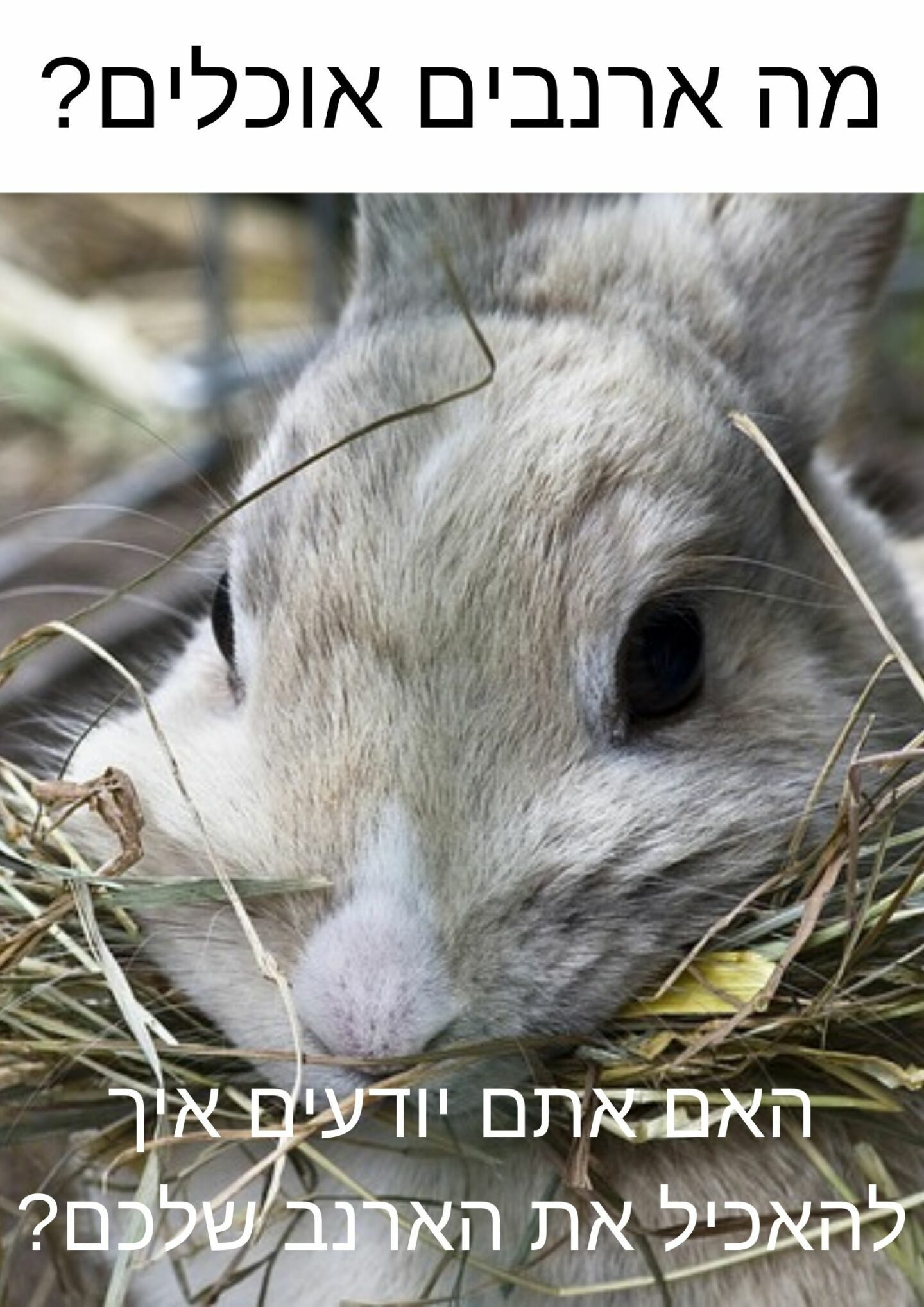 what-rabbits-eat-banner